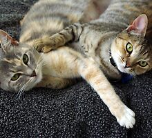 SIBLING LOVE by Helen Akerstrom Photography