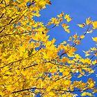October gold by Tamara Travers