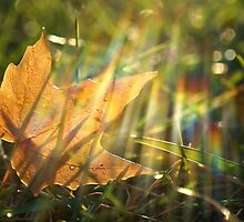 Yellow Maple Leaf in the Grass by Nalinne Jones
