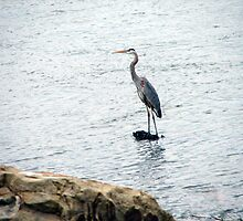Heron At Eufaula Dam by Carolyn  Fletcher