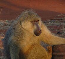 'Cheeky Monkey' by Jack  Castle