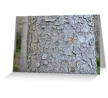Tree Trunk Nature Pattern Greeting Card