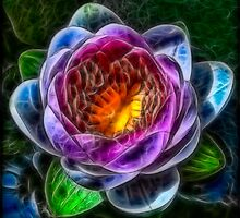 Fractalius Water Lilly by Nigel Butterfield