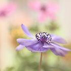 Anemone dream by Lyn Evans