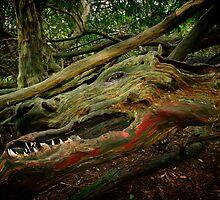 Forest Dragon by Karl Willson