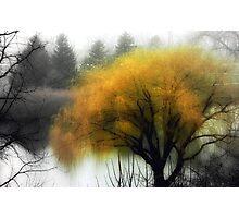 Foggy Morning © Photographic Print
