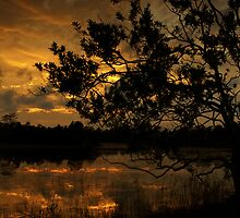 Winter in The Everglades by JKKimball