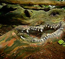 BARK OF THE DRAGON TREE by Karl Willson