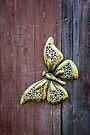Golden Flutterby by PhotosByHealy