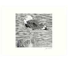 Rock Harbor Seagull Art Print