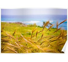 Meadow by the sea Poster