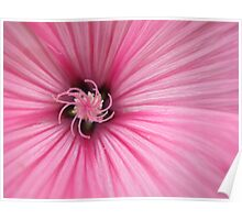 Macro Pink Flower Photography Poster