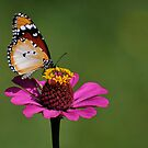 Butterfly Uganda - 1 by Paulo van Breugel