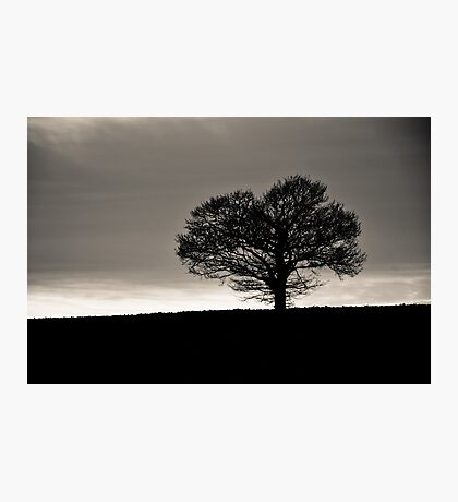 Silhouette of Life Photographic Print