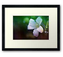 Wet and White Framed Print