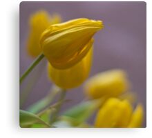 Soft Tulips Canvas Print