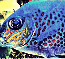Blue Tropical Fish by MissDawnM