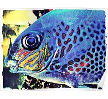 Blue Tropical Fish Poster