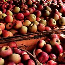 An Apple A Day by Rebecca Reist