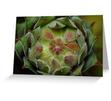 Prickly Kaleidoscope Greeting Card