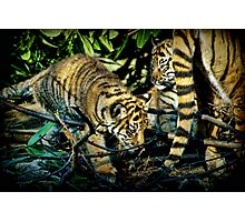 tiger cubs Photographic Print