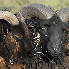 Locking Horns Or A Tender Moment by Barrie Woodward