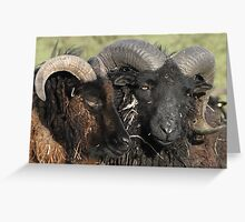 Locking Horns Or A Tender Moment Greeting Card