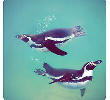 Penguins by photografever