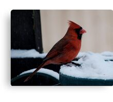 Cardinal Awaits Canvas Print