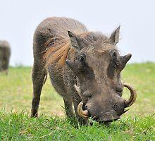 Pumbaa by Paulo van Breugel