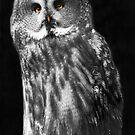 Great Grey Owl by dunawori