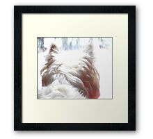 Looking for squirrels in a snowstorm Framed Print