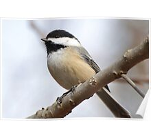 Hello My Little Chickadee Poster