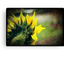 Another Grungy Sunflower Canvas Print