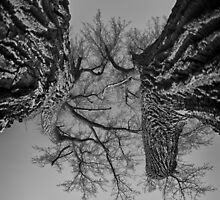 Dueling Brothers Fighting Trees by Robert Smith