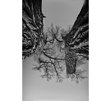 Dueling Brothers Fighting Trees Photographic Print
