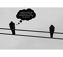 What birds think about Photographic Print