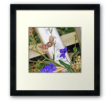 Tasty Nectar  Framed Print