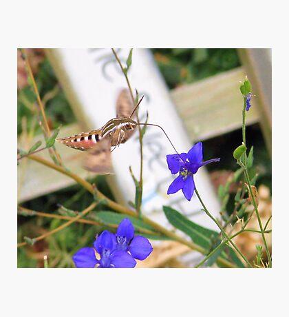 Tasty Nectar  Photographic Print