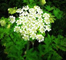 June's Cow Parsnip by Alice Schuerman