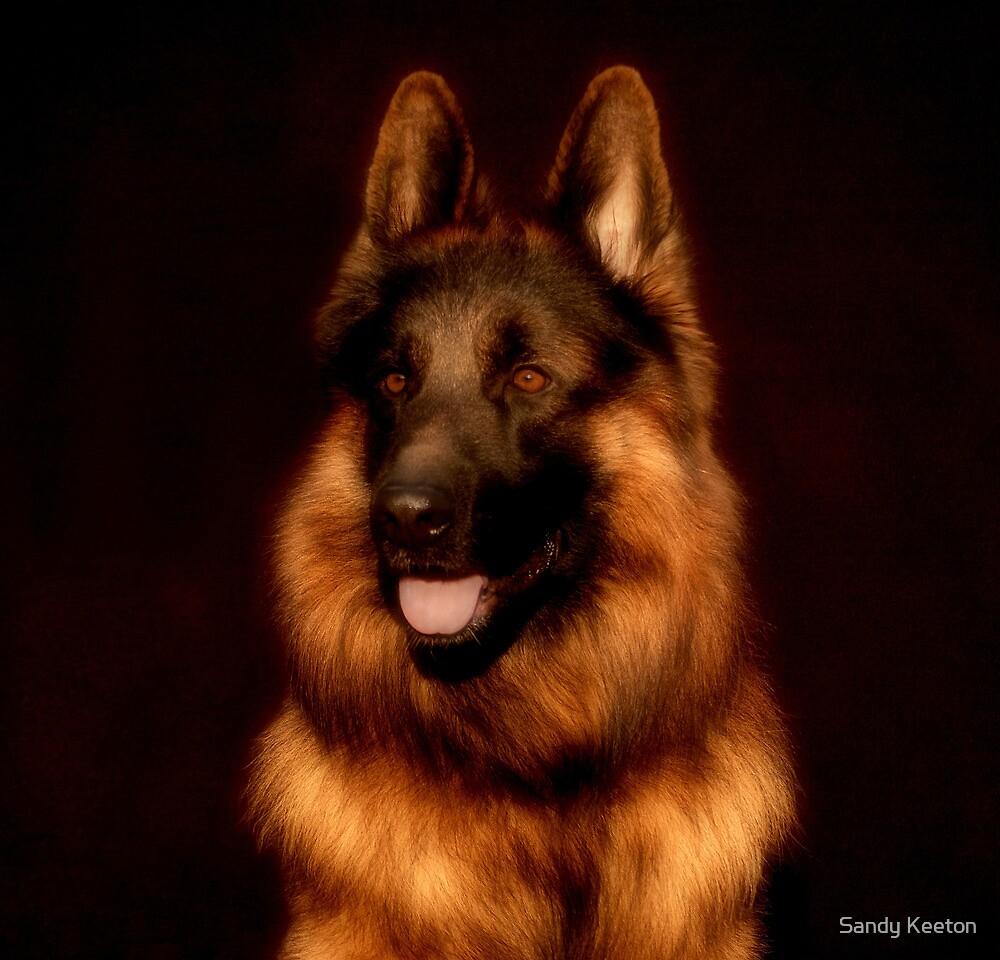 German Shepherd Portrait by Sandy Keeton