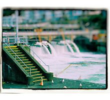 Birds at Ballard Locks Photographic Print