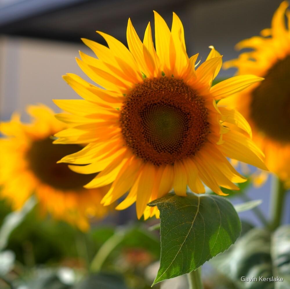U R the Sunshine of my Life by sedge808
