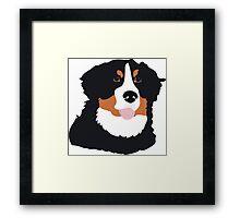 Bernese Mountain Dog Framed Print