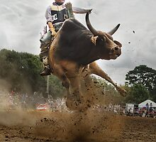 Up and Close with an Angry Bull by AmeliaC