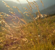 Indian Summer by ShannonHatfield