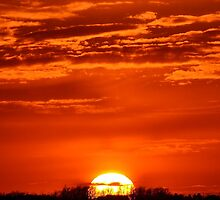 Bedding Sun by Justin Kracht