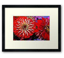 Red zinnias Framed Print