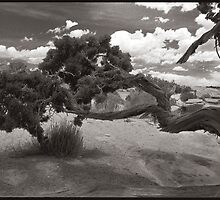 Gnarled Tree by Steven Lungley