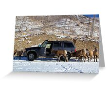 Portable Salt Lick Greeting Card